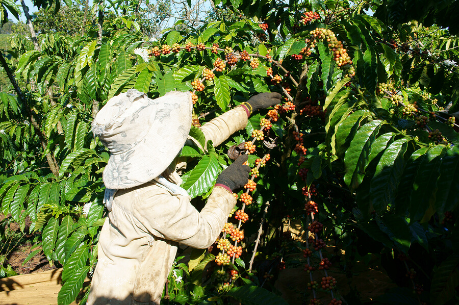 Coffee Farms